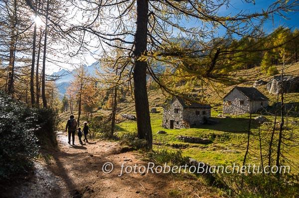 05 © F R Bianchetti  RBB6519